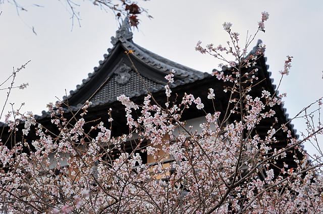 inuyama-jo2.jpg